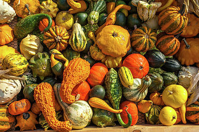 Photograph - Abundant Autumn Harvest by Jenny Rainbow