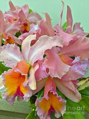 Photograph - Abundant Orchids by Barbara Plattenburg