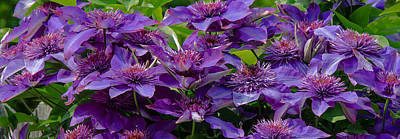 Photograph - Abundant Purple by Susan  McMenamin