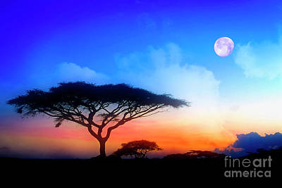 Photograph - Acacia Sunset by Scott Kemper