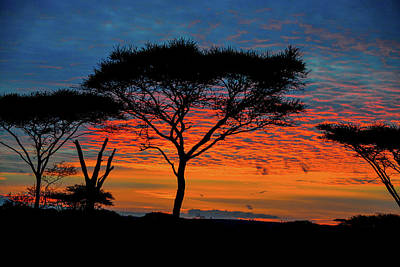 Photograph - Acacia Surnise On The Serengeti by Marilyn Burton