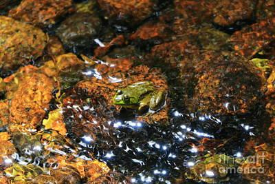 Jordan Stream Photograph - Acadia Amphibian  by Elizabeth Dow