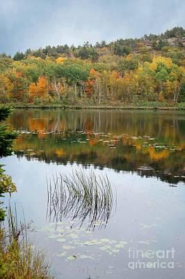 Photograph - Acadia Autumn by David Birchall