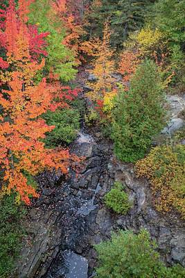 Photograph - Acadia Fall Colors 2 by Paul Schultz