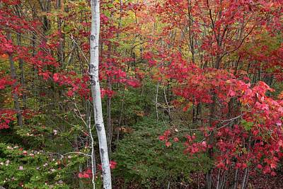 Photograph - Acadia Fall Colors by Paul Schultz
