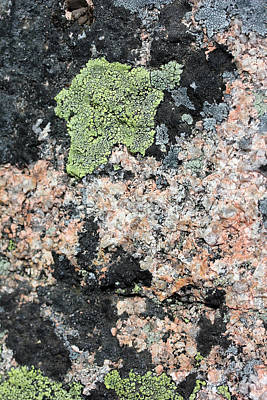 Photograph - Acadia Granite 50 by Mary Bedy