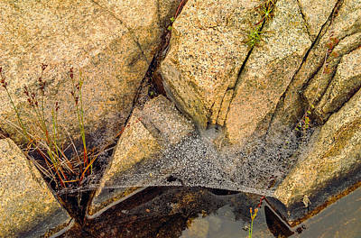 Acadia Granite With Spiderweb And Grasshopper Photo Art Print by Peter J Sucy