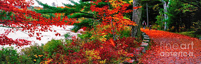 Photograph - Acadia National Park Carriage Roads Fall Bike Maine  by Tom Jelen