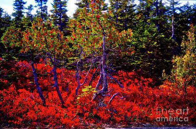 Photograph - Acadia Natl. Park Gorham Mountain Trail Head by Tom Jelen