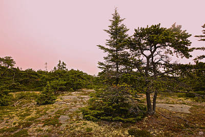 Photograph - Acadia Pink Sky by John Meader