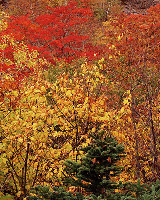 Photograph - Acadia Red Green And Gold by Tom Daniel