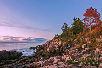 Photograph - Acadia by Sharon Seaward