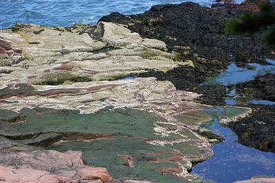 Photograph - Acadia Shoreline Colors by Mary Bedy
