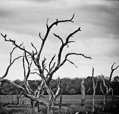 Ace Basin Swamp With Dead Trees Art Print