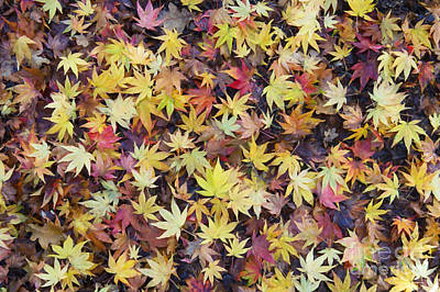 Vivid Fall Colors Photograph - Acer Fall by Tim Gainey