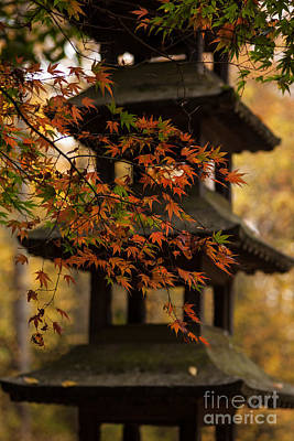 Japanese Maple Photograph - Acer Pagoda by Mike Reid