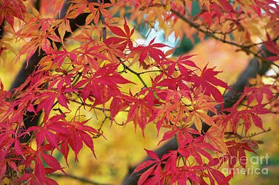 Vivid Fall Colors Photograph - Autumn Fire by Tim Gainey