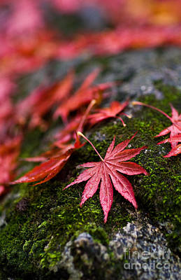 Fall Colors Photograph - Acers Fallen by Mike Reid