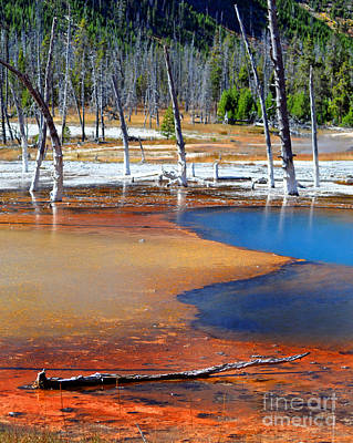 Yellowstone Park Photograph - Acid Soup Yellowstone by Diane E Berry