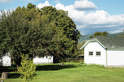Photograph - Acme Apple Tree by Tom Cochran
