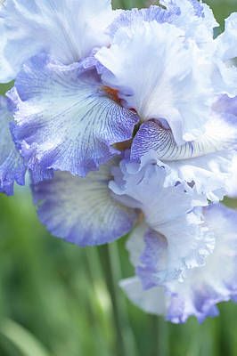 Photograph - Acoma. The Beauty Of Irises by Jenny Rainbow