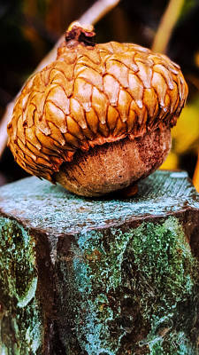 Photograph - Acorn by Bruce Carpenter