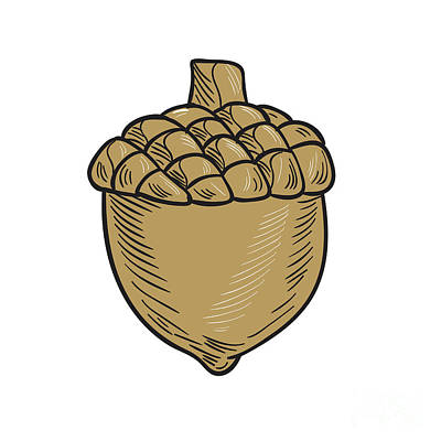 Acorn Digital Art - Acorn Drawing by Aloysius Patrimonio