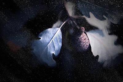 Acorn Digital Art - Acorn In Snow by Terry Davis
