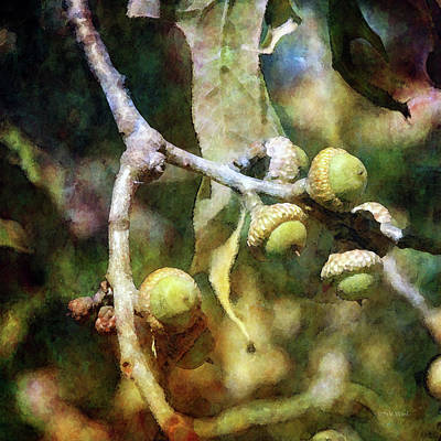 Photograph - Acorns 4059 Idp_2 by Steven Ward