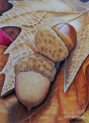 Autumn Foliage Drawing - Acorns by Sharon Patterson