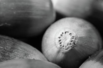 Photograph - Acorns by SR Green