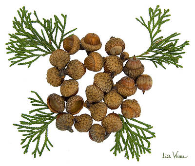 Digital Art - Acorns With Cedar by Lise Winne
