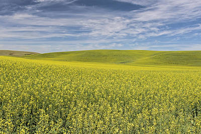 Photograph - Acreage Of Yellow by Jon Glaser