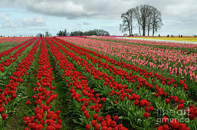 Photograph - Acres And Acres Of Beauties by Nick Boren