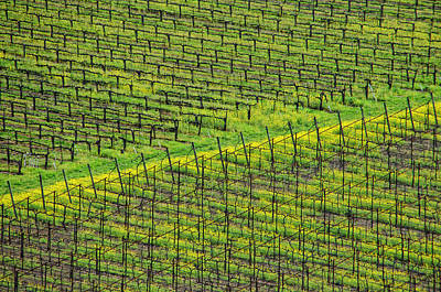 Photograph - Acres Of Vines by Donna Blackhall