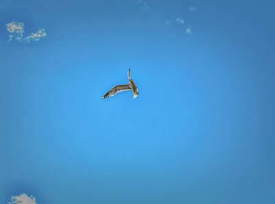 Photograph - Acrobatics #h8 by Leif Sohlman