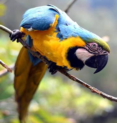 Parrot Photograph - Action Parrot by HQ Photo