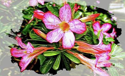 Digital Art - Adenium Asian Flower by Ian Gledhill