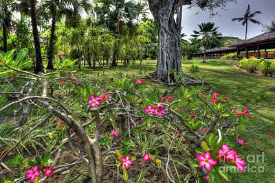 Jawa Photograph - Adenium Flower - Bali by Kevin Oconnell
