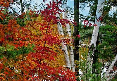 Photograph - Adirondack Autum by Sheila Ping