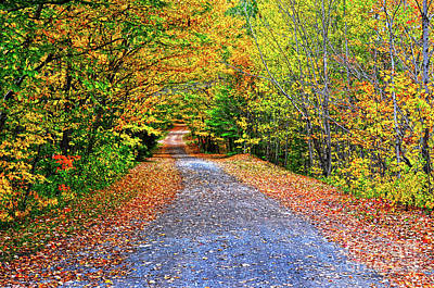 Photograph - Adirondack Autumn Road by Diane E Berry