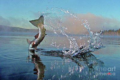 Rainbow Trout Photograph - Adirondack Life by Brian Pelkey