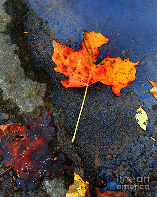 Achieving Royalty Free Images - Adirondack Season Change Royalty-Free Image by Diane E Berry