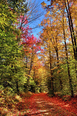Photograph - Adirondack Trail by David Patterson
