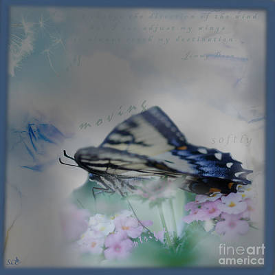 Photograph - Adjust My Wings by Sandra Clark