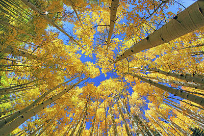 Photograph - Admiring Aspens - Colorado - Autumn by Jason Politte