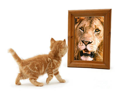 Admiring The Lion Within Art Print