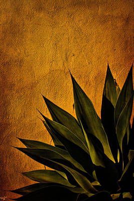 Photograph - Adobe And Agave At Sundown by Chris Lord