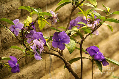 Photograph - Adobe Garden Wall by Linda Shafer