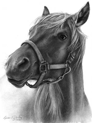 Tennessee Walker Drawing - Adolescent Grin - Ranger by Susan Donley